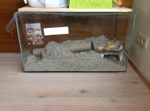 Hamster making his home in the leftover cellulose insulation of his owner's #Passivhaus.